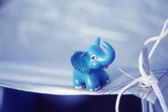 Elefant_1984_01